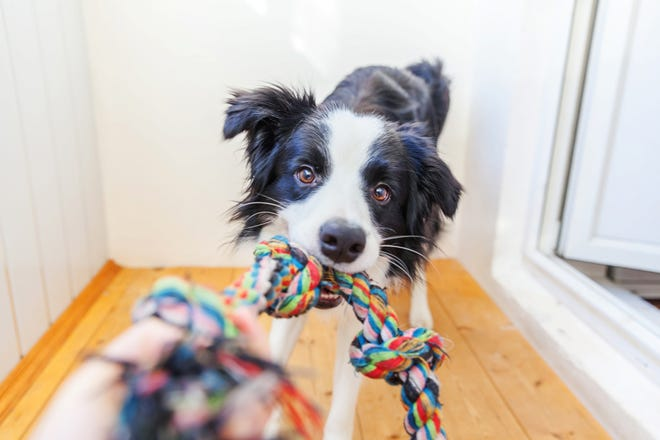 Chew toys are a great tool for quelling your pet's anxious tendencies.
