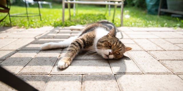 Heatstroke can happen to pets in hot backyards. American Humane recommends pet owners to have shady spots available at all times for animals that are spending time outside. (iStock)